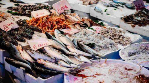 visgerechten vismarkt